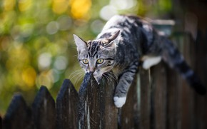 Picture cat, cat, kitty, the fence, kitty, bokeh