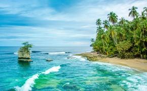 Picture sea, palm trees, shore, Caribbean, Costa Rica