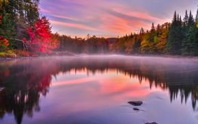Wallpaper autumn, trees, fog, lake