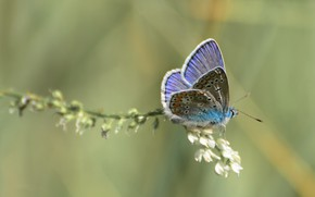 Picture summer, butterfly. mood, macro flowers nature