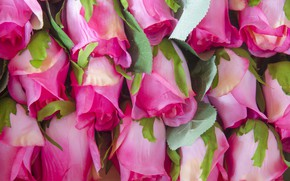 Picture flowers, roses, pink, buds, pink, flowers, roses, bud