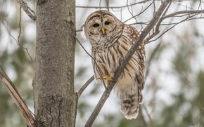 Picture branches, background, tree, owl, bird, bokeh, owl, motley