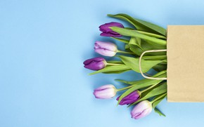 Picture background, blue, bouquet, purple, tulips, bag