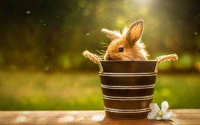 Picture summer, look, light, strips, bench, nature, green, background, rabbit, baby, muzzle, bucket, pot, sitting, Bunny, …