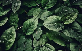 Picture Macro, Leaf, Drops, Leaves, Green, Plants, by Sohail Na