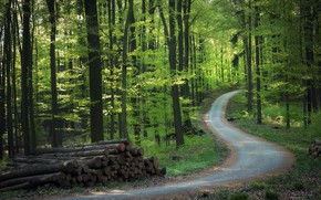 Picture road, forest, wood