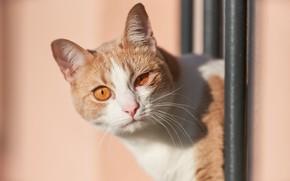 Picture cat, cat, look, background, muzzle