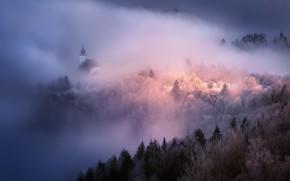 Picture landscape, nature, fog, Church, forest