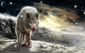 Picture sunset, blood, wolf