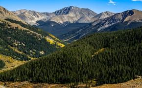 Picture Nature, Mountains, Forest, Colorado, Landscape, Aspen