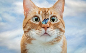 Picture cat, cat, look, butterfly, photoshop, red, photoart
