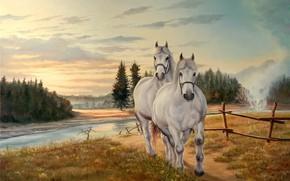 Picture landscape, nature, horse