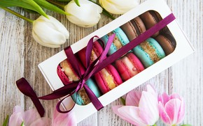 Picture colorful, tulips, pink, tulips, macaroons, macaron, macaroon
