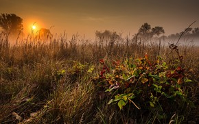 Picture landscape, nature, dawn, beauty, morning, meadow