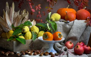 Picture the dark background, food, corn, pumpkin, dishes, fruit, still life, composition, quince, persimmon