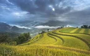 Picture Nature, Clouds, Mountains, Figure, Field, Landscape, Vietnam, Terrace