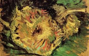 Picture sunflower, Vincent van Gogh, Two Cut Sunflowers