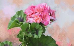 Picture leaves, background, texture, flowers, Geranium