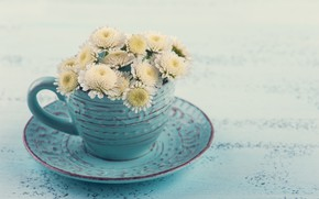 Picture Cup, white, chrysanthemum, THE OFF