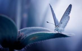 Picture flower, butterfly, flower, butterfly, Fauzan Maududdin