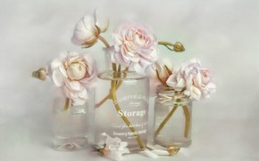 Picture glass, water, flowers, background, petals, art, jars, three, vase, white, painting, glass, bottle, Ranunculus, bouquets