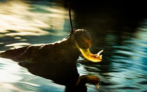 Picture autumn, water, macro, light, pose, sheet, glare, pond, reflection, leaf, snail, ruffle, shell, lighting, dry, …