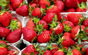Picture berries, food, harvest, strawberry, a lot, containers, juicy