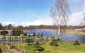 Picture river, tree, spring, estate