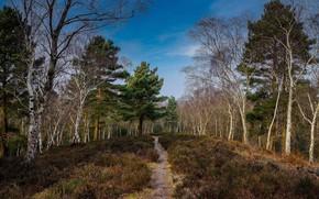Picture forest, landscape, nature, beauty, trail, path