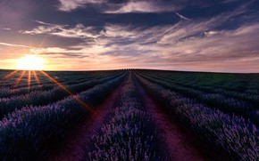 Picture field, the sky, the sun, clouds, rays, light, landscape, sunset, flowers, nature, perspective, dark, France, …