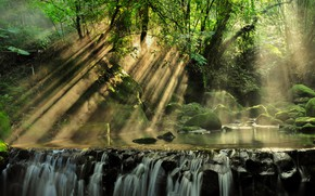 Picture forest, rays, light, trees, landscape, nature, stream, stones, moss