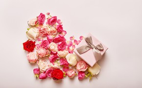 Picture background, pink, holiday, gift, buds, heart, congratulations