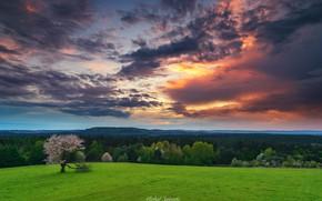 Picture field, landscape, clouds, nature, tree, Poland, forest, Sośnicki Michael