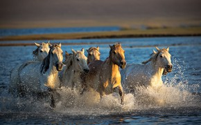 Picture river, horse, the herd