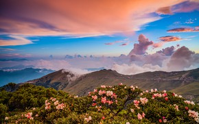 Wallpaper greens, clouds, landscape, flowers, mountains, nature, fog, blue, hills, the slopes, tops, beauty, spring, morning, ...