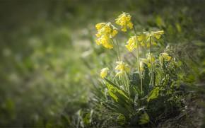 Picture flowers, flowers, bokeh