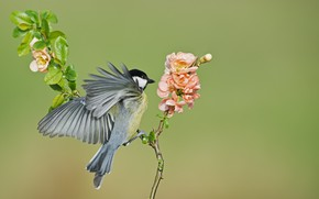 Picture flowers, background, bird, branch