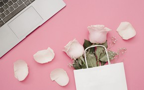 Picture flowers, background, pink, roses, petals, laptop, pink, flowers, petals, roses, laptop