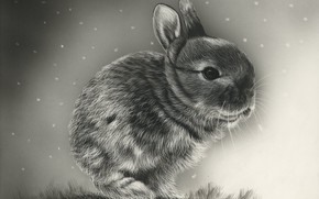 Picture rabbit, background, art
