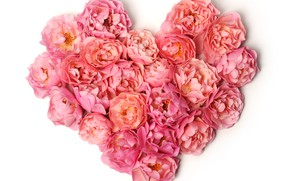 Picture white, flowers, background, heart