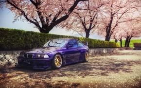 Picture spring, Japan, Sakura, BMW, speedhunters, E36, Rocket Bunny, M3