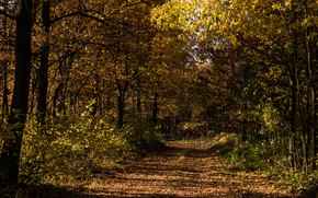 Picture autumn, forest, grass, trees, nature, foliage