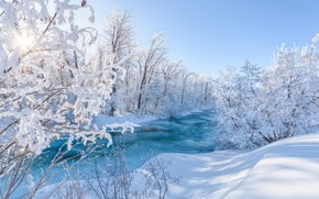 Picture winter, frost, forest, the sun, rays, light, snow, trees, branches, nature, river, shore, tale, morning, …