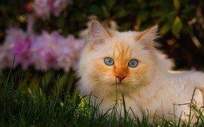Picture cat, white, grass, cat, look, face, light, flowers, nature, pose, the dark background, background, glade, …