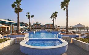 Picture palm trees, pool, resort, Qatar, Dog, Qatar, Doha