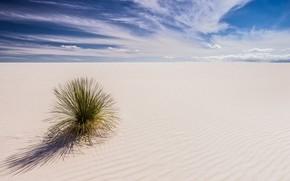 Picture desert, plant, USA, New Mexico, white sand