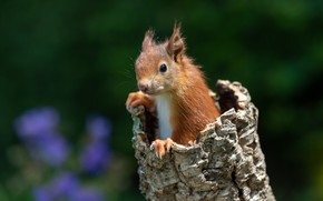 Picture nature, pose, stump, baby, protein, rodent, squirrel