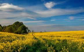 Picture field, summer, the sky, clouds, trees, flowers, blue, spring, dal, yellow, Church, track, path, rape, …