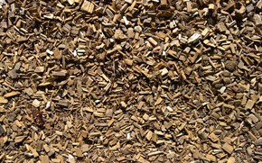 Picture wallpaper, wood, texture, background, path, shred, shredded wood
