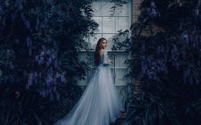 Picture girl, mood, dress, window, Wisteria, Wisteria, Bird Man, Grace Bowker